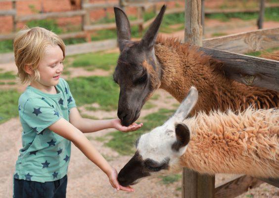 Ausflugsziele mit Kindern in Rosenheim